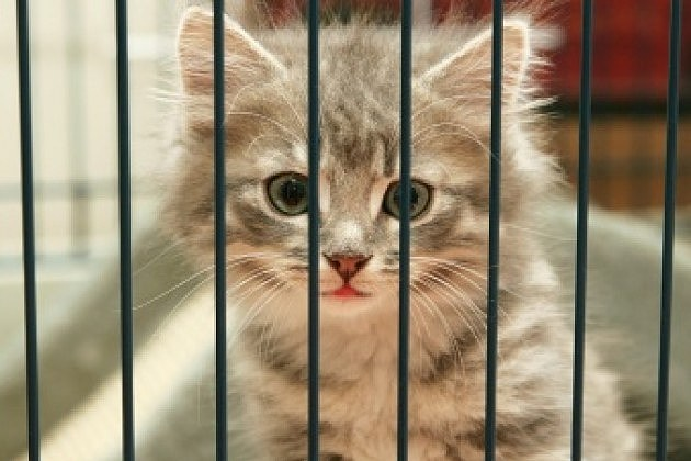 Animal Shelter Cats For Sale