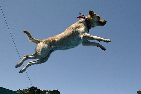 Grand junction 39 s high winds could cause dogs to take flight for Best airline to fly dogs