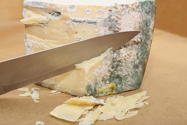 the cheese is old and moldy