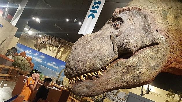 Dinosaur Journey