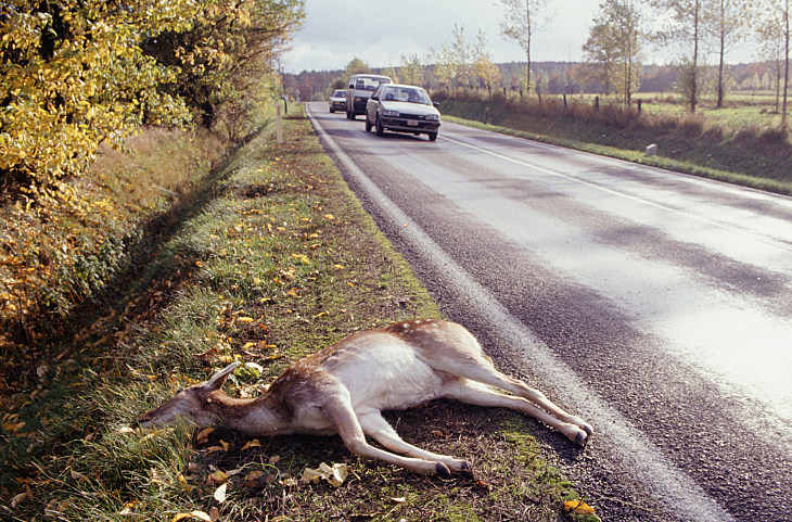 How likely to hit a deer in Colorado
