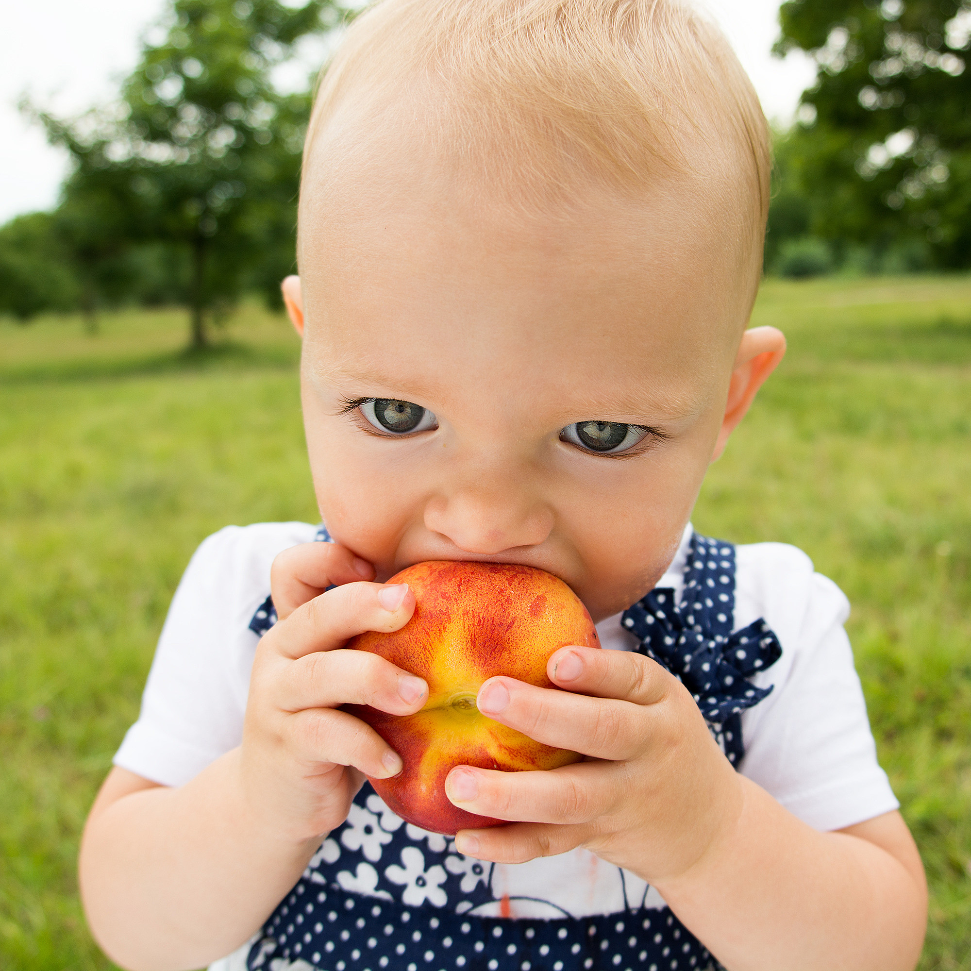 cute little girl eating peach on the grass in summertime