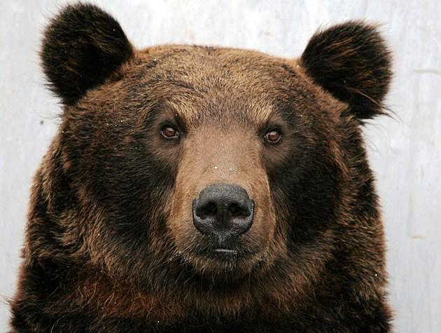 Bears Break Into Estes Park Italian Restaurant
